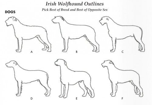 Irish wolfhound how to draw google search dogs jes my irish wolfhound how to draw google search dogs jes my favorite kinds pinterest irish wolfhounds wolfhound and dog ccuart Choice Image