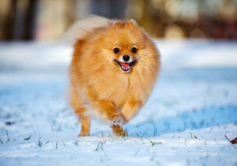 10 Winter Safety Tips For Dog Owners Dog Paw Protection