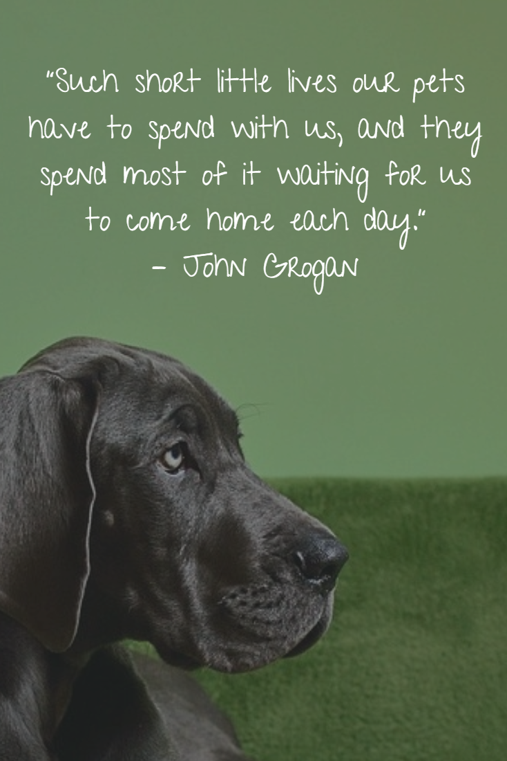 Dog Gone 20 Inspirational Quotes About Losing A Dog Canine