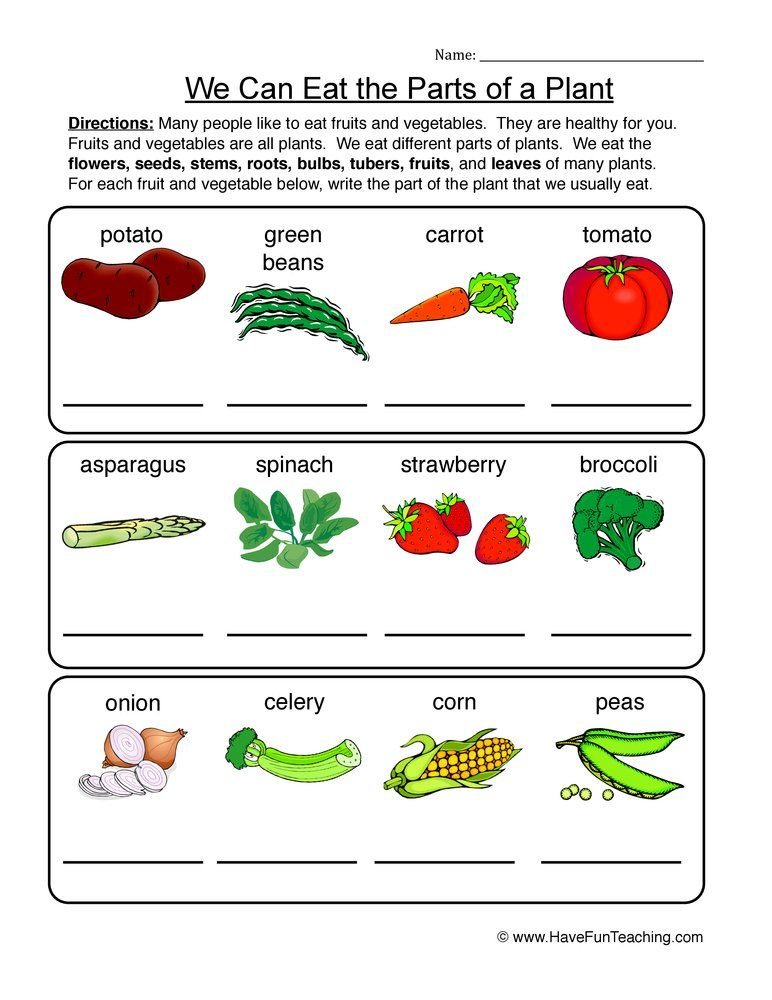 Edible Parts Of A Plant Worksheet