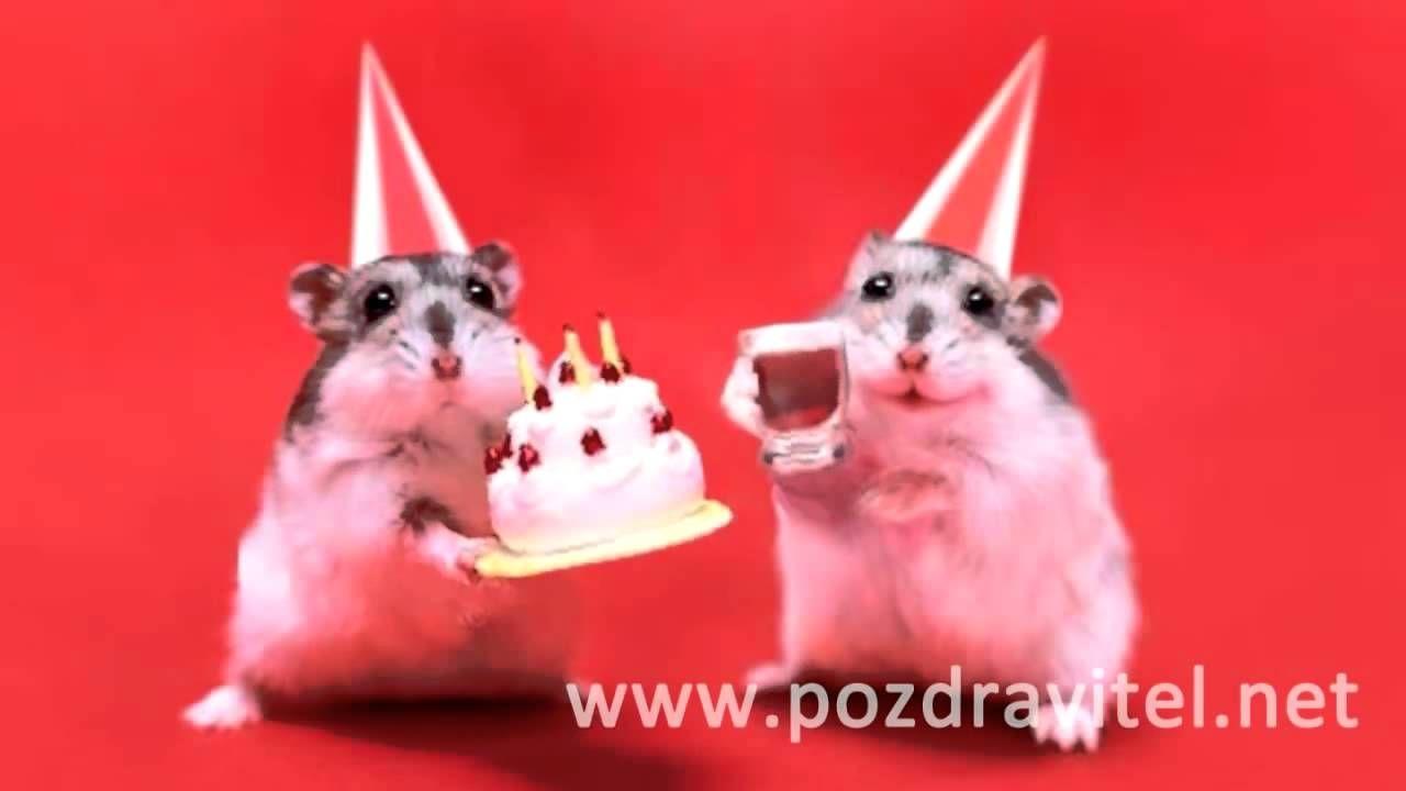 Милые хомячки поздравляют с днем рождения видео открытка с днем рожджения