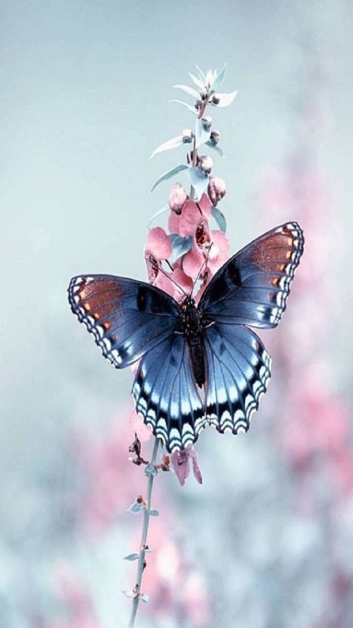 Butterfly wallpaper by rosemaria4111 - 7e - Free o