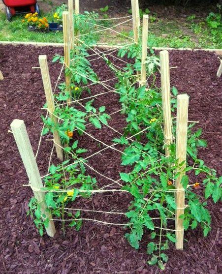 Stake Tomatoes Google Search Tomato Trellis Veg Garden Container Gardening Vegetables