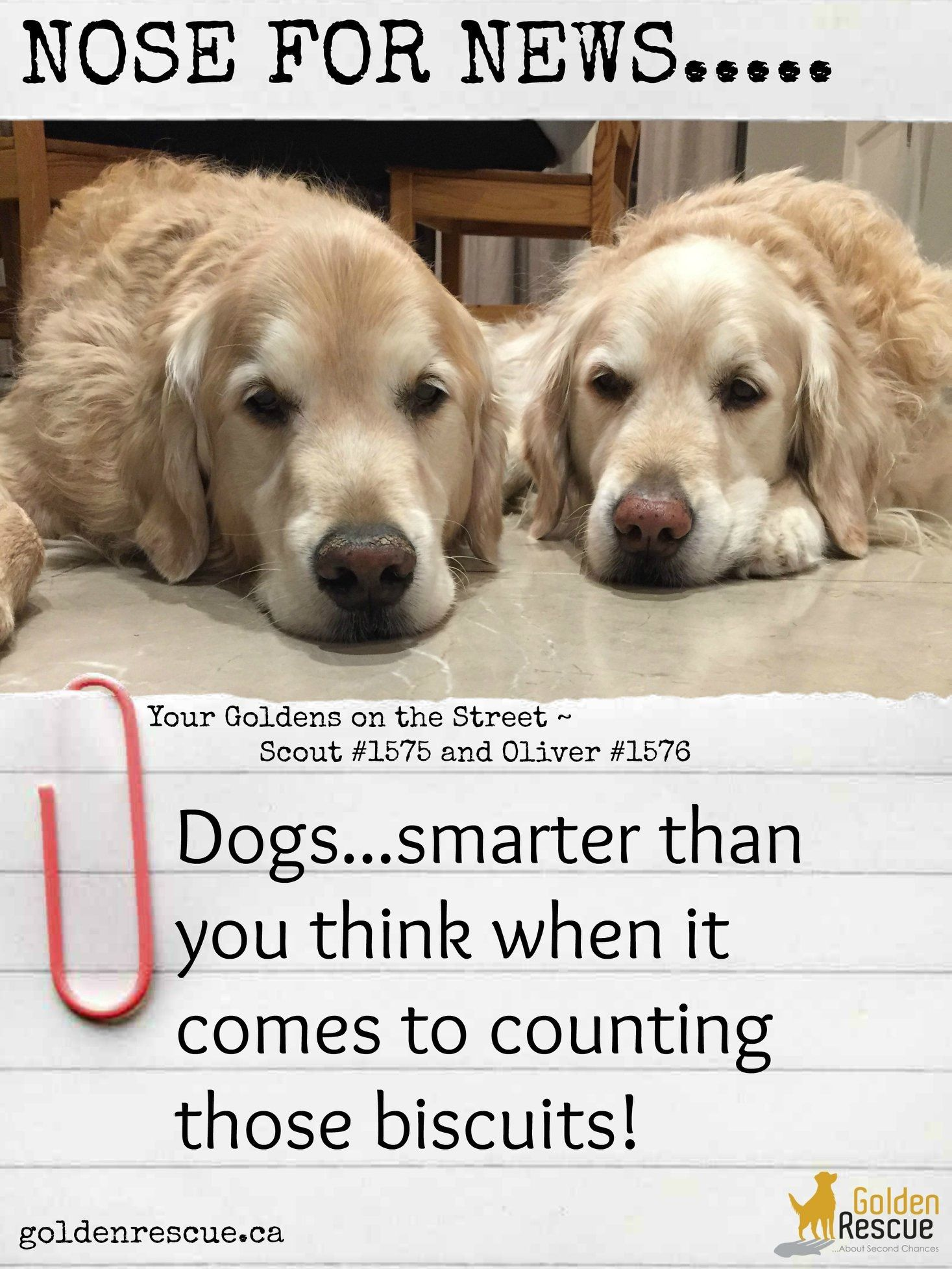 Two Is More Than One And Some Dogs Can Tell You That Http Bit Ly 38kooea Goldenretriever Nosefornews In 2020 Therapy Dogs Dogs Sick Kids
