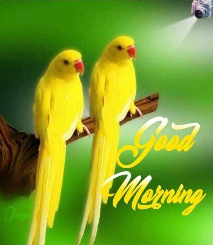 Good Morning With Love Birds Good Morning Pictures Good Morning
