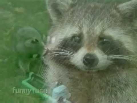 Happy Birthday Funny Raccoon Style Youtube Funny Happy