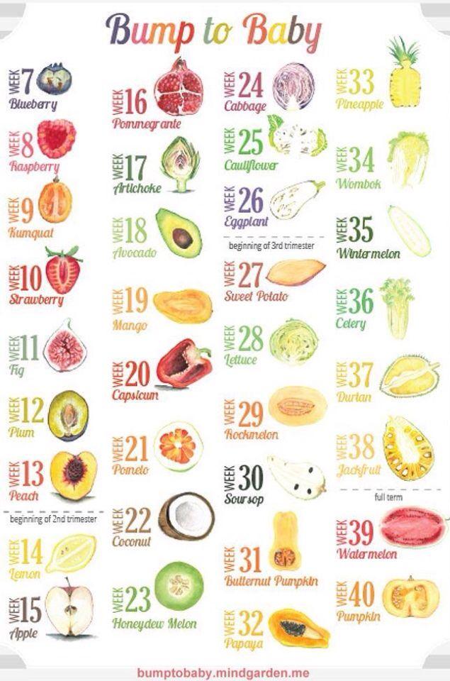 Baby size fruit also seatle davidjoel rh