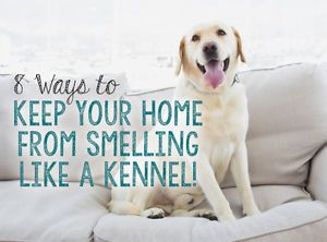 8 Ways To Keep Your Home From Smelling Like A Kennel Dog Smells