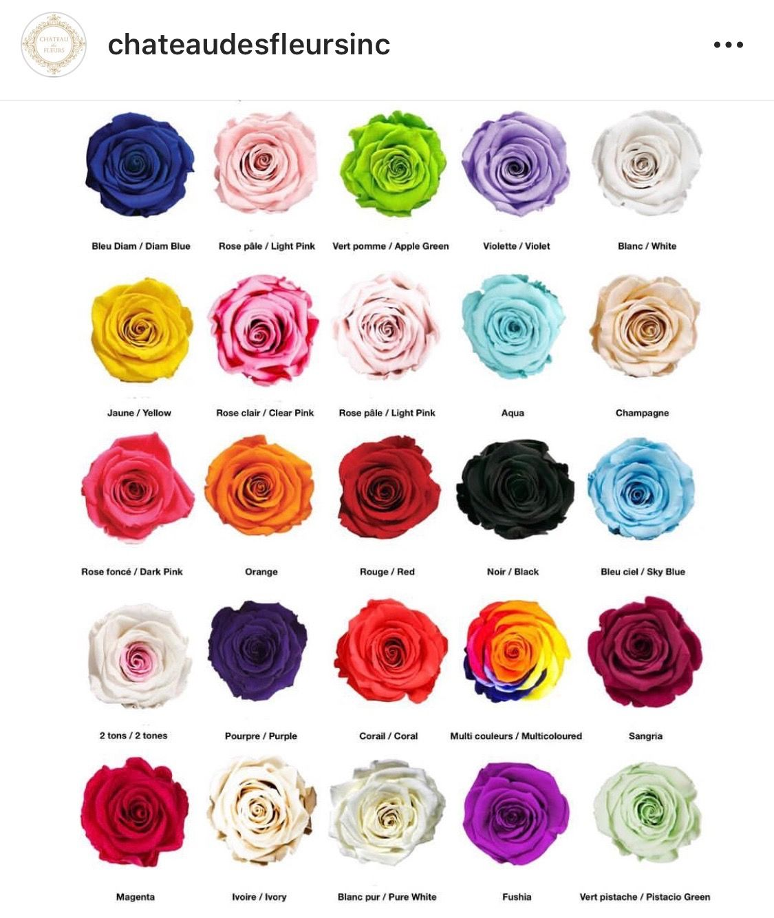 Pin By Crystal Gail Paxson Hill On Roses Rose Color Meanings Flower Meanings Flower Names