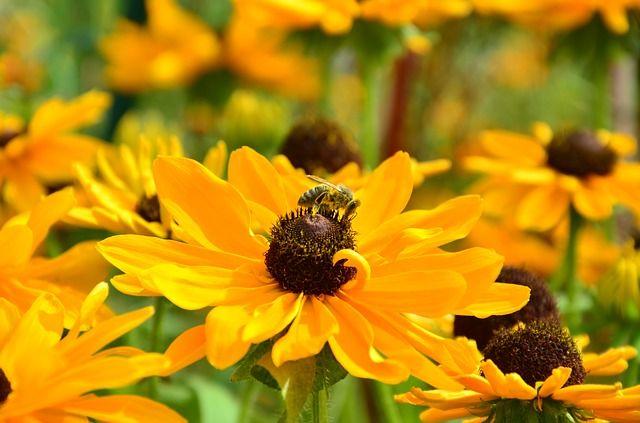 150 bienenfreundliche Pflanzen für Ihren Garten » GARTENMOEBEL.DE