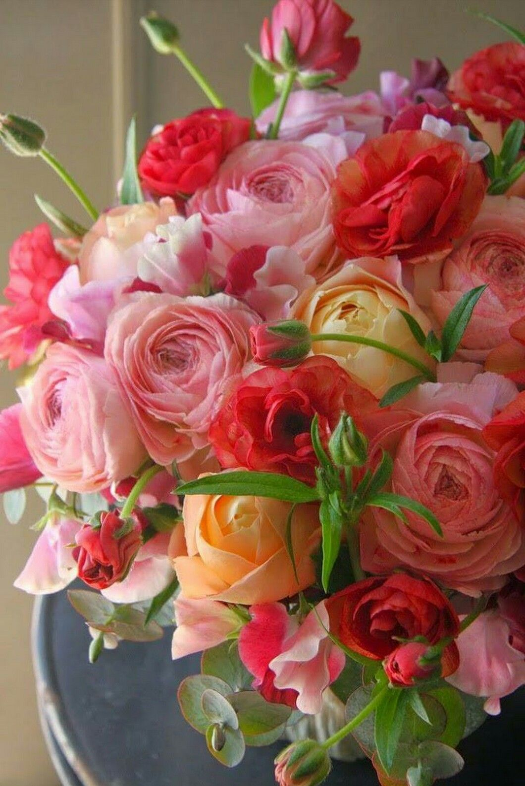 Pin By Cmn On Rose Pinterest Flowers Beautiful Flowers And