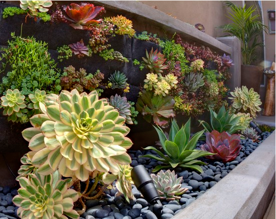 Beautiful combination of black rocks and succulents River Rocks