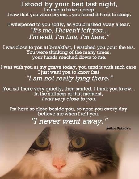 I Never Went Away Pet Remembrance Pet Poems Pet Loss Grief
