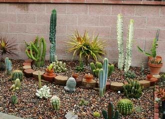 Beautiful Cactus Garden Ideas Combined With Some Graceful Furniture Make This Garden  Look Graceful 2