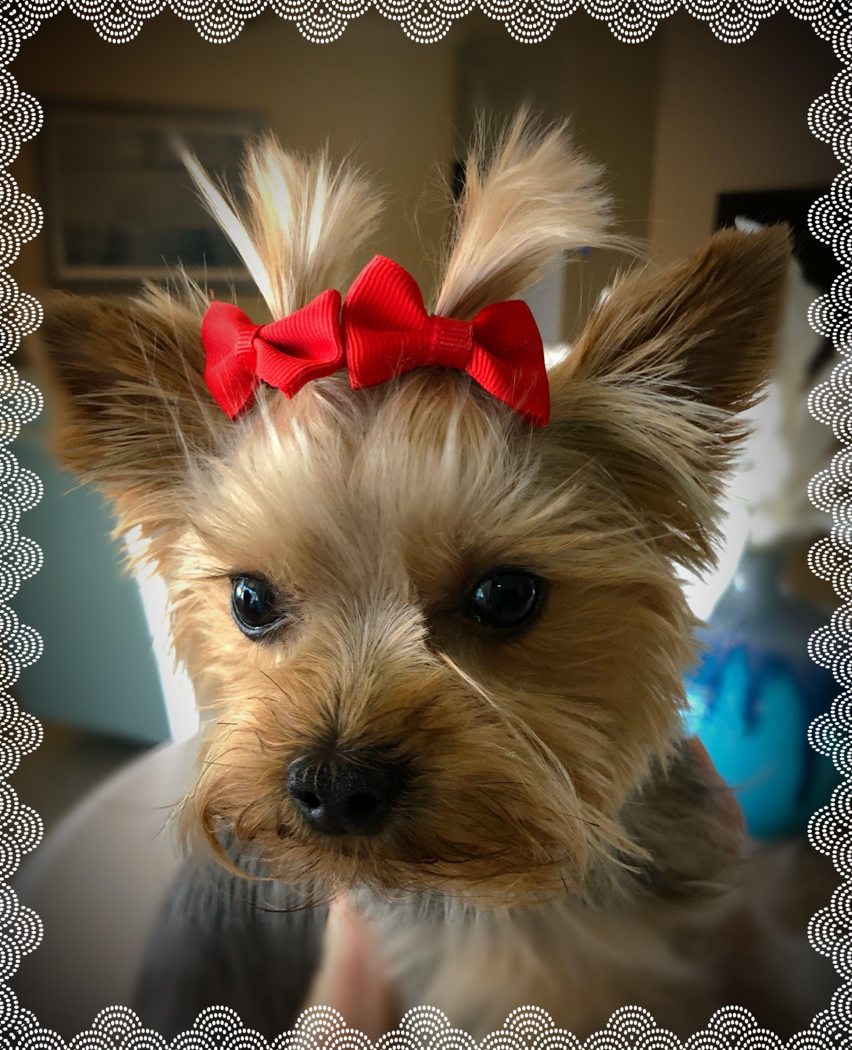 Pin by jennifer dibaririggs on animals pinterest dogs puppies