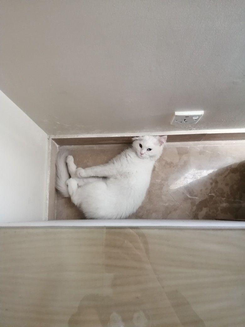 Pin By Sana Khan On Cats Cats