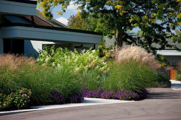 den vorgarten neu gestalten üppige vegetation als sichtschutz, Moderne deko