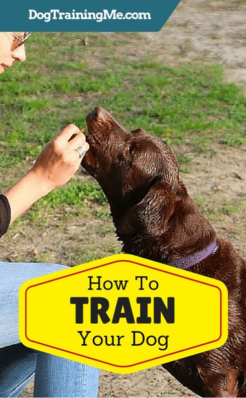 How To Train Your Dog To Come When Called To Sit And To Stop