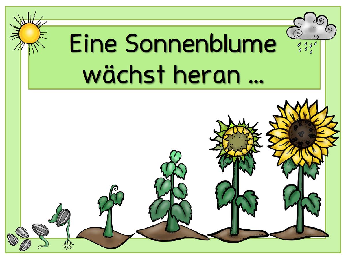 JacMo\'s Primary Box: Tafelmaterial Sonnenblume - Bohne - Kürbis ...