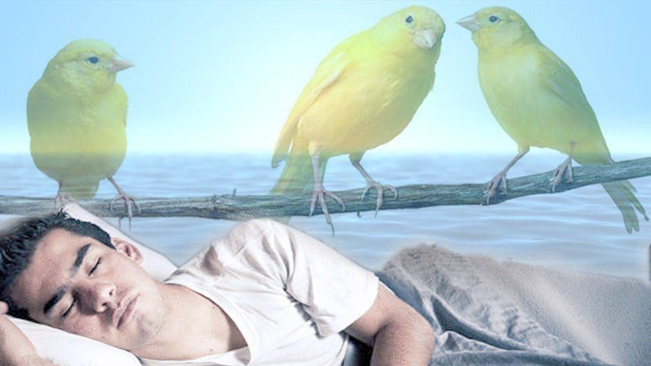 تفسير رؤيا بيض العصافير في الحلم Society Animals Interpretation