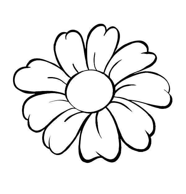 Lovely Daisy Flower, : Daisy Flower Outline Coloring Page
