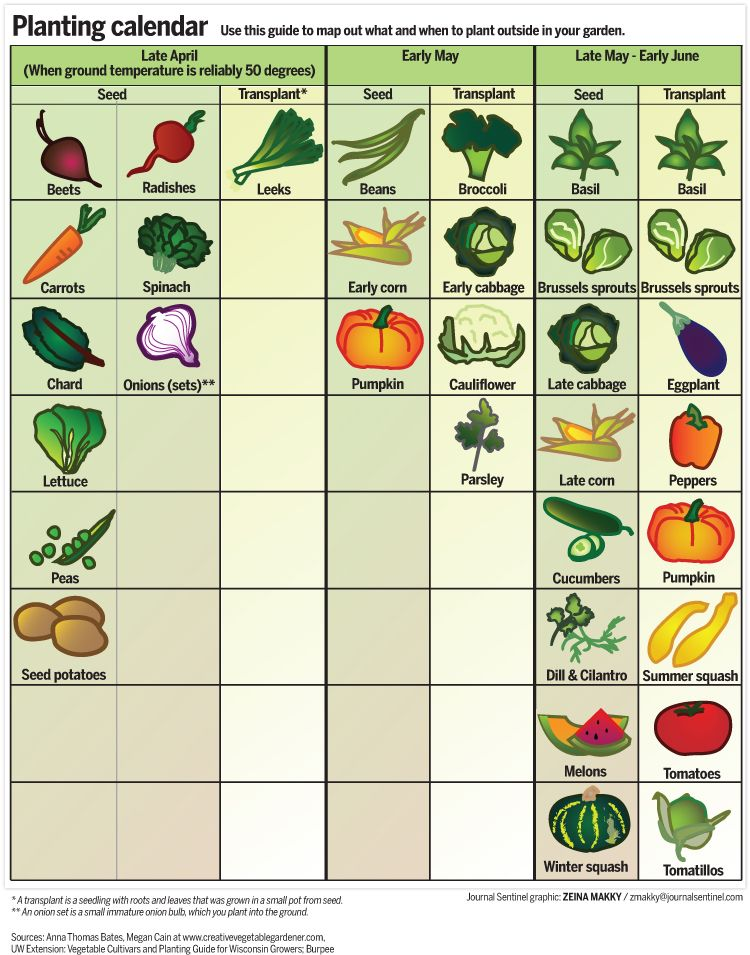 Spring Garden Calendar: When To Plant Fruits And Vegetables In Wisconsin    JSOnline