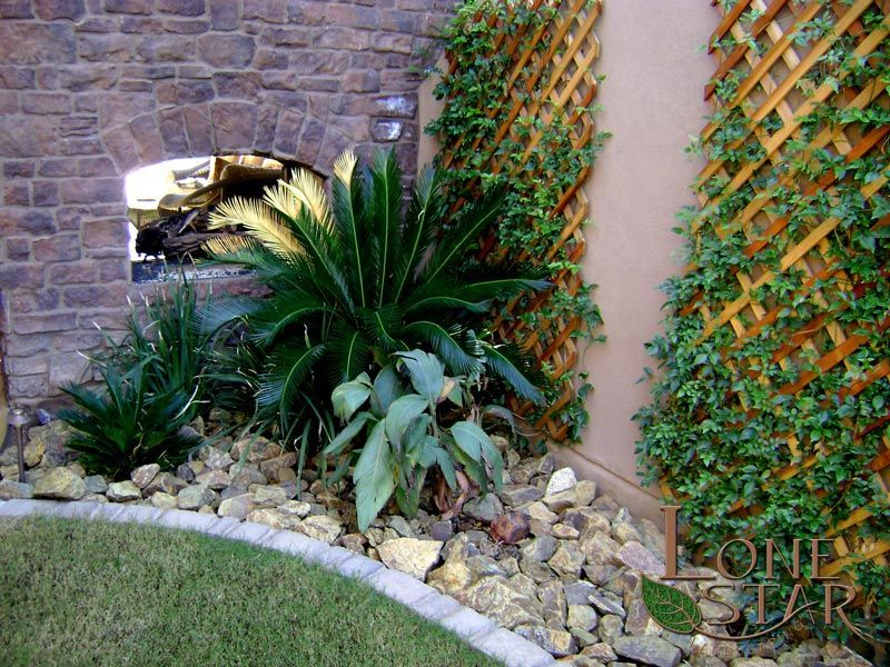 Trellis Planting Ideas Part - 38: Sago Palm In Landscape With Trellis And Double Sided Fireplace In Phoenix,  AZ. -