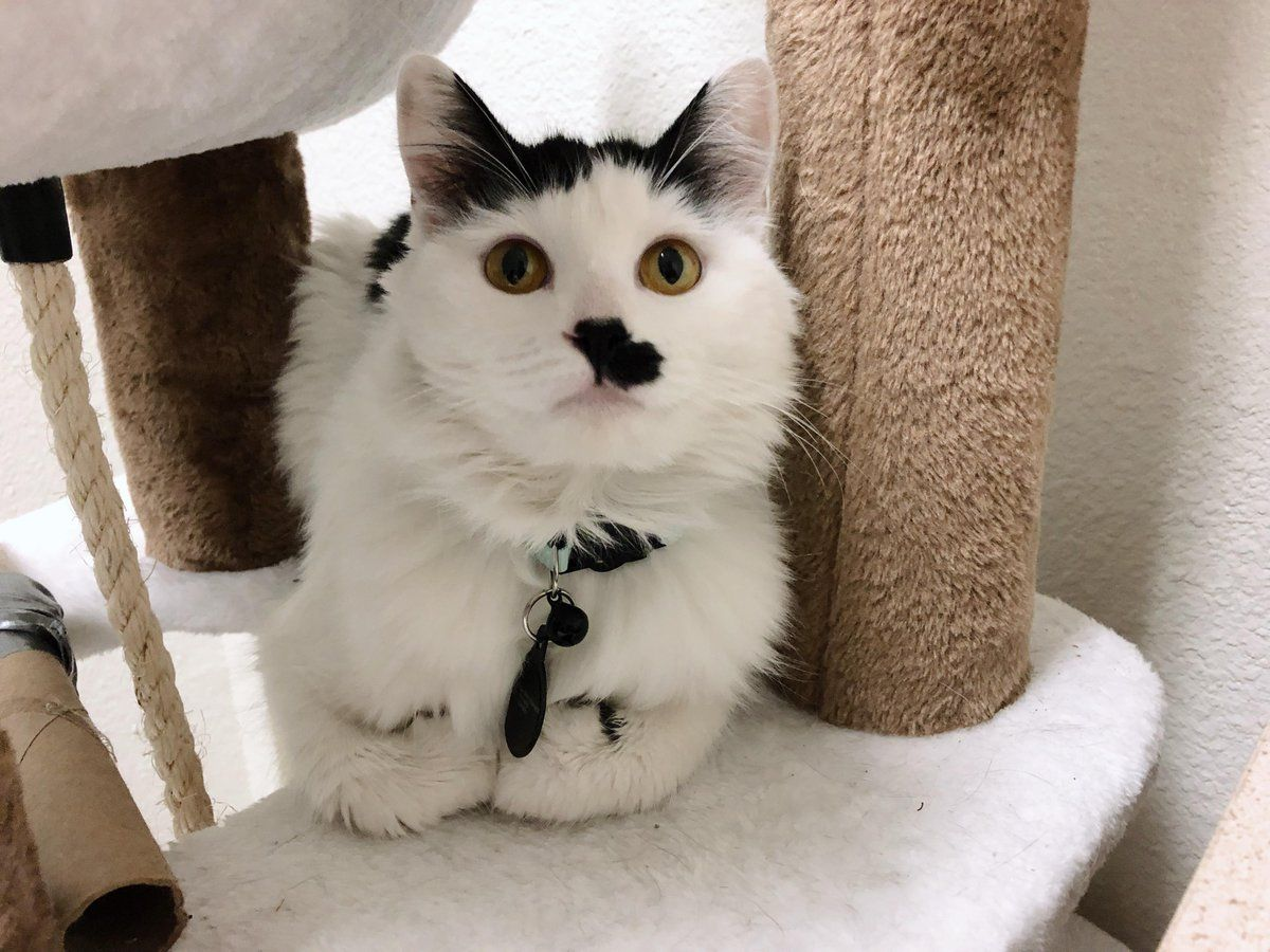 2 Twitter Cute Cats And Dogs Kittens And Puppies Cute Animals