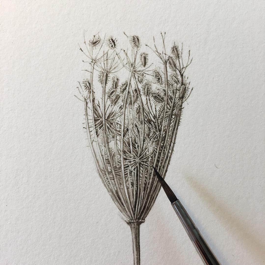 Il Diario Botanico E Le Illustrazioni Di Lara Gastinger Frizzifrizzi Disegni Botanici Illustrazioni Illustrazione Botanica