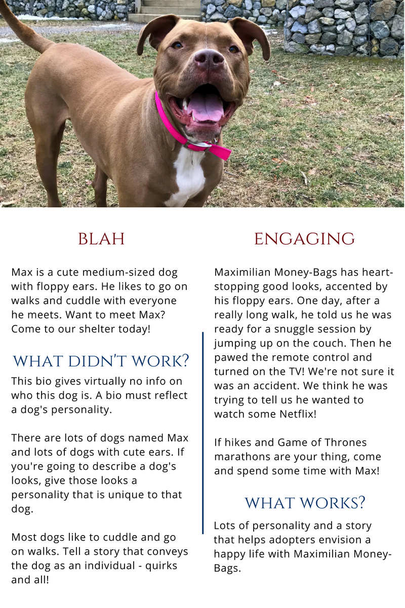 How To Share Every Endearing Quirk About A Dog Without Overwhelming Adopters Dogs Pet Businesses Adoption Help