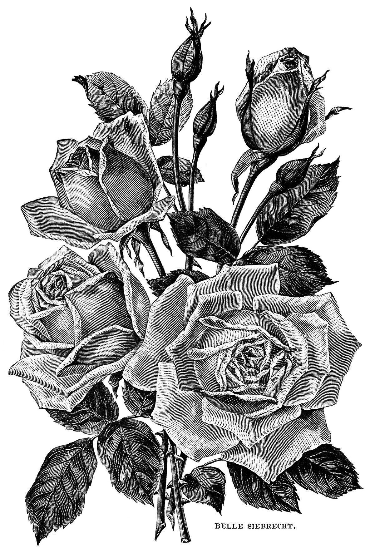 vintage garden clipart black and white flower illustration roses