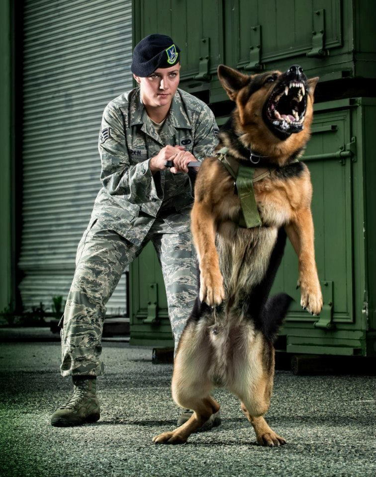Usaf Working Dogs Military Working Dogs German Shepherd Dogs