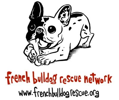 Looking For A Frenchie Choose To Rescue French Bulldog Rescue