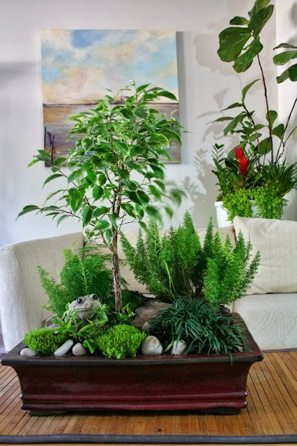 Kein haus mit garten mit diesen tollen kleinen g rten im topf kann man trotzdem einen eigenen - Asiatische zimmerpflanzen ...