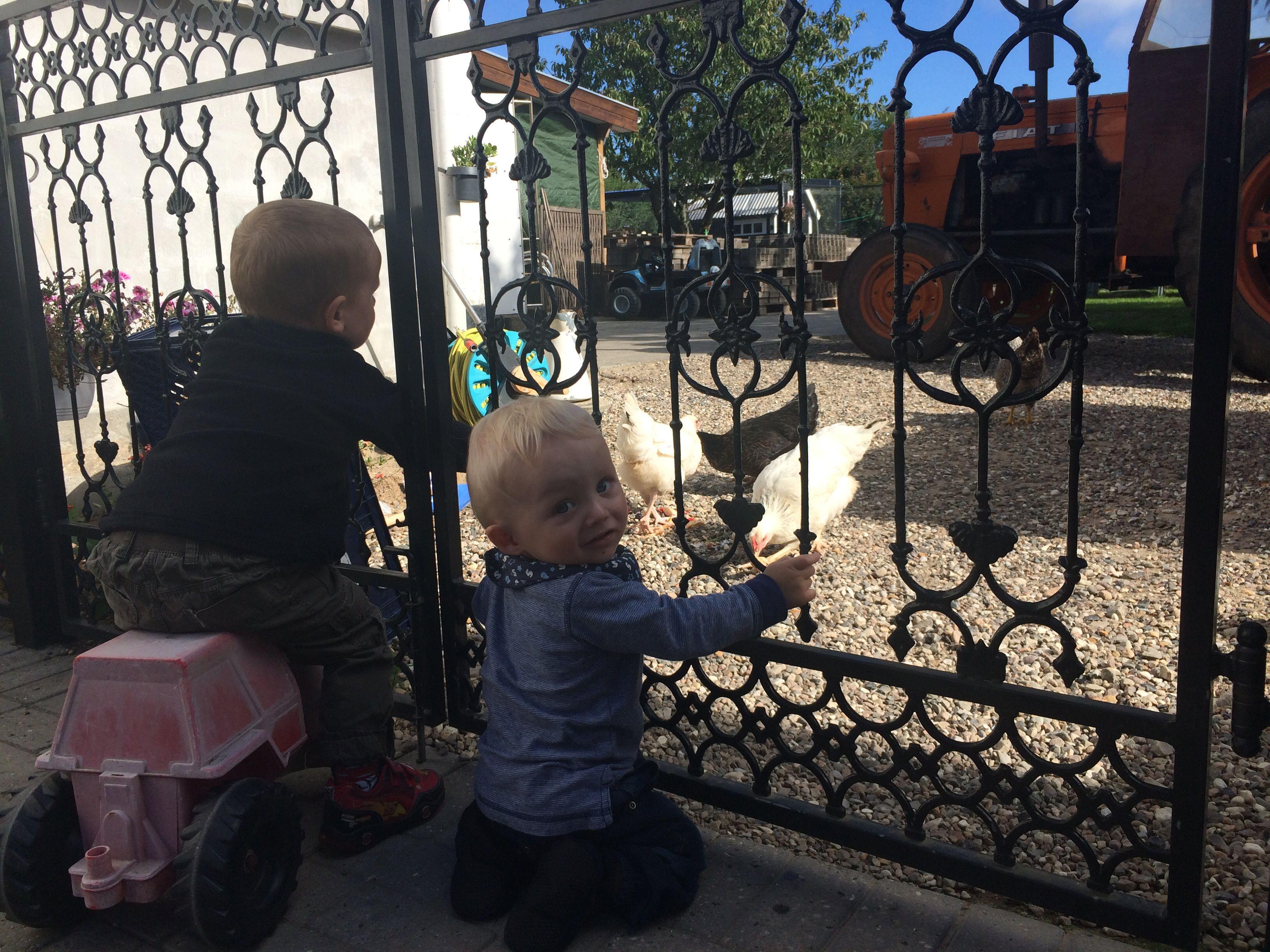 Børn i bur, høns i det fri.