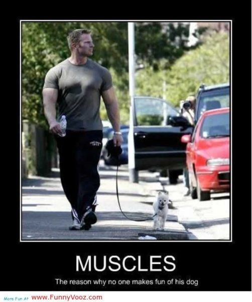 cool Muscles Handsome Man - funny sayings | Funny workout ...