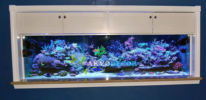 99 Koleksi Ide Design Aquarium Air Laut HD Terbaru Unduh Gratis