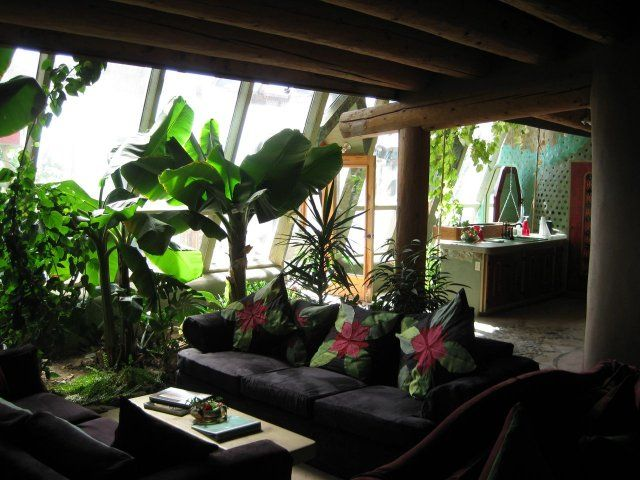 Banana Trees In The Living Room I Really Want To Grow Bananas My They Were BEST Too Couldnt Eat A From