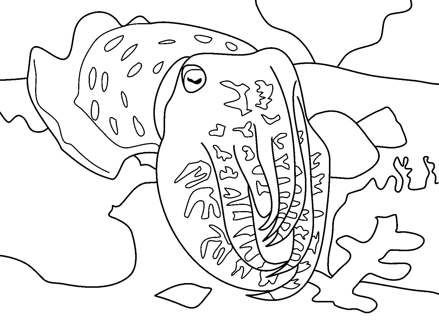 Cuttlefish Coloring Pages Free Coloring Book Download Coloring Books Coloring Pages
