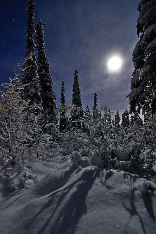 ❄ A MidWinter's Night's Dream ❄... A Walk by Moonlight... By Artist Lee Peterson...