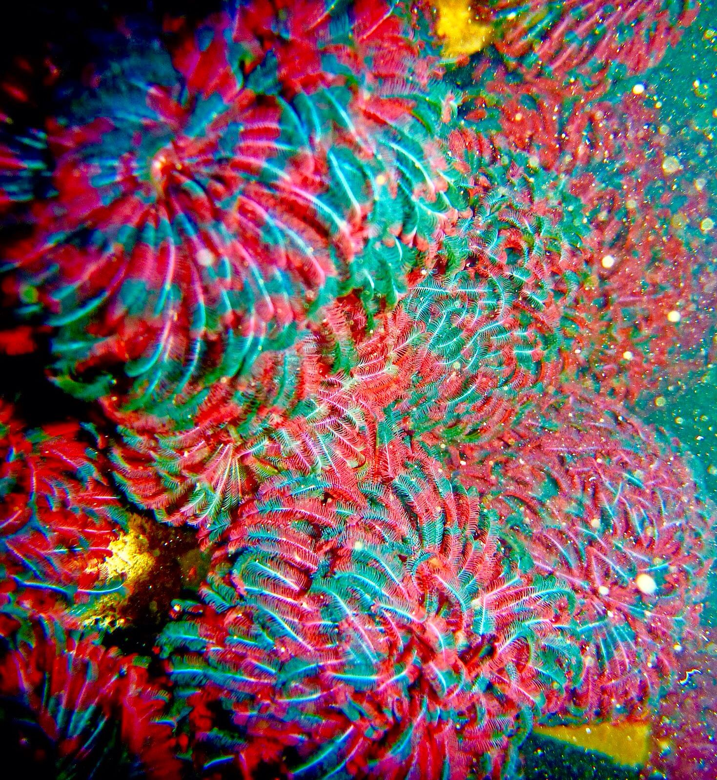 Feather Duster Worms Cool Fish Sea Creatures Marine Fish