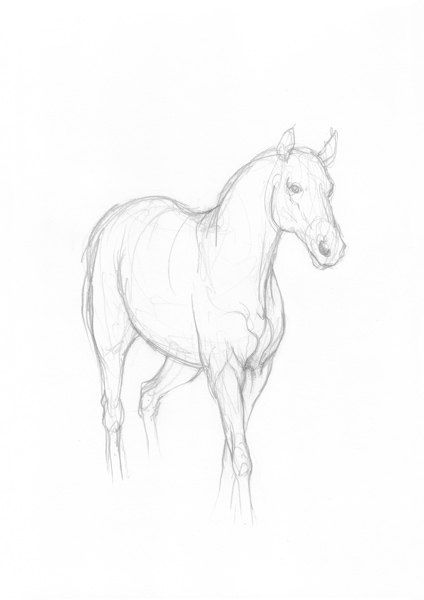 Horse Simple Drawing Original Pencil Sketch By Intuicio On Etsy