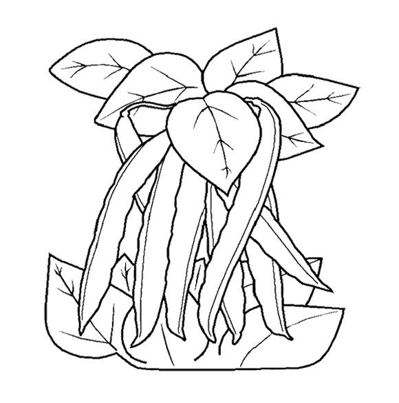 The Long Leaves With Vegetable Coloring Page For Kids ...