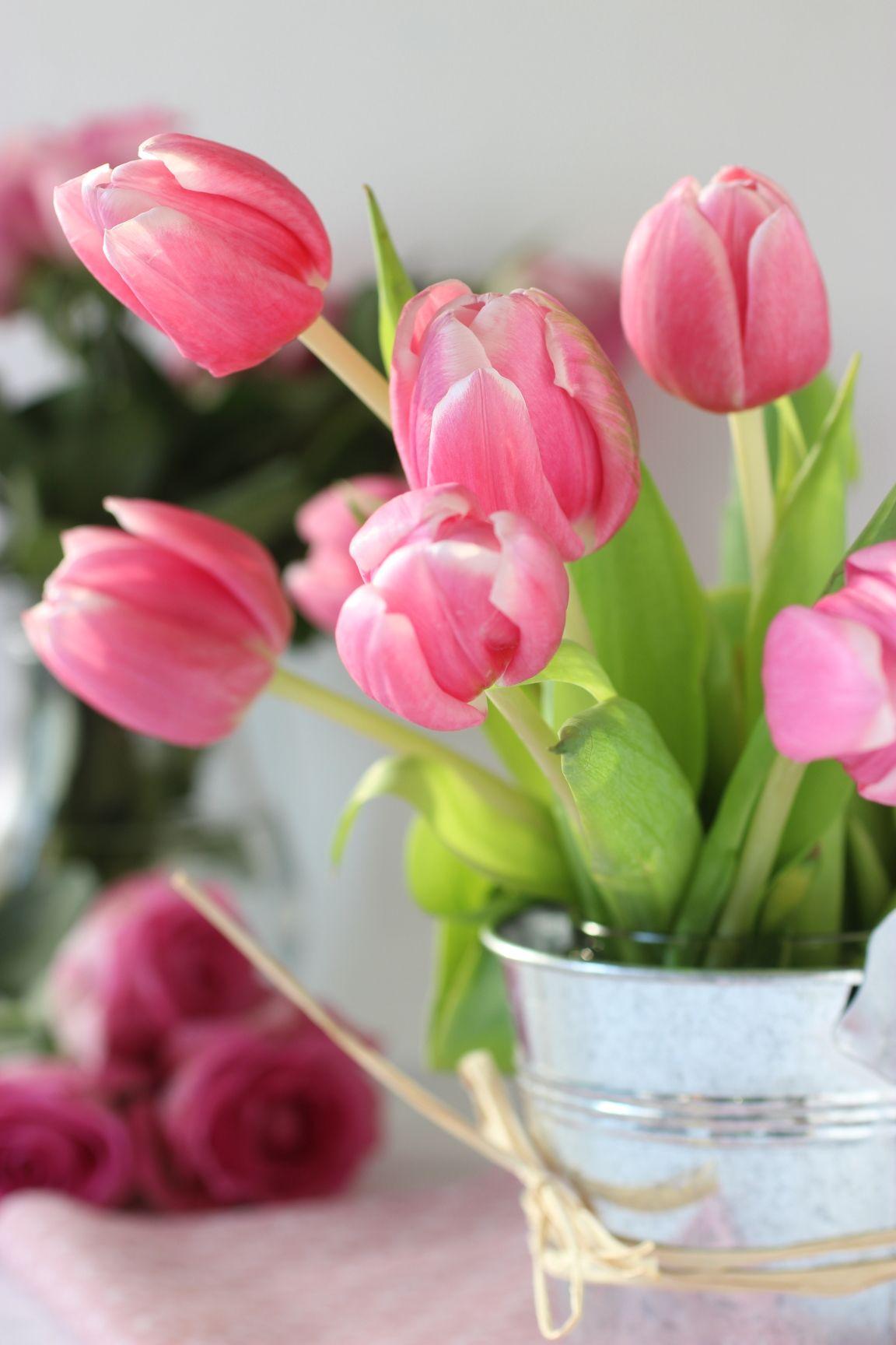 Tulipani #tulips #springflowers #pink