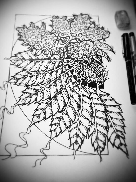 Botanical drawing tattoo pinterest dessin feuille tatouage et id e dessin - Feuille cannabis dessin ...