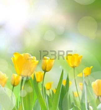 Krajina Royalty Free Fotografie A Reklamni Fotografie Fragrance Oil Blossom Fragrance