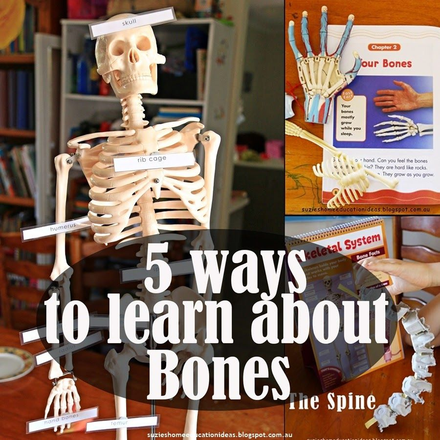 5 Ways To Learn About Bones Anatomy Skeletons And Learning