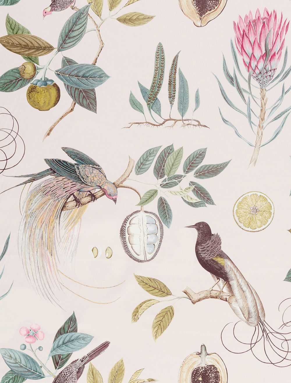 Paradesia By Sanderson Orchid Grey Fabric Wallpaper Direct Curtain Fabric Patterns Orchid Wallpaper Sanderson Fabric