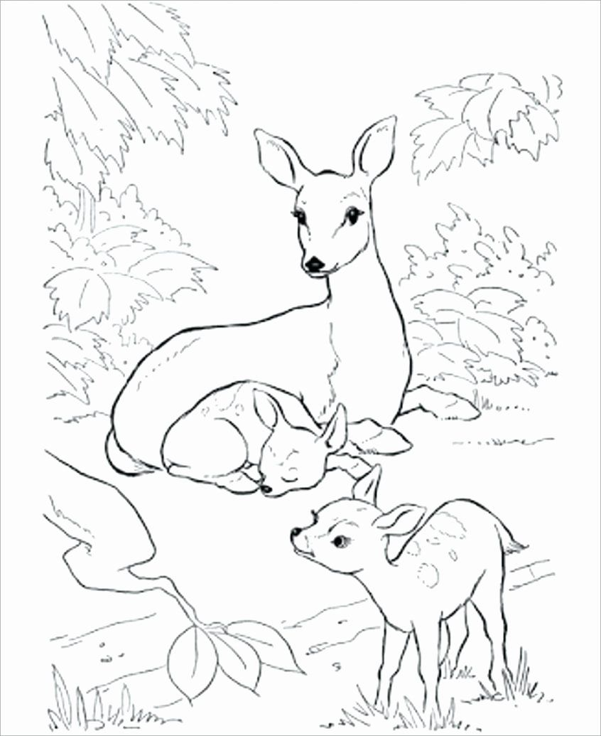 Coloring Queen Color Pages Awesome Coloring Pages Red Queen Coloring Book Colored Pocoyo Deer Coloring Pages Animal Coloring Books Farm Animal Coloring Pages
