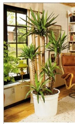 Plants For North Facing Windows